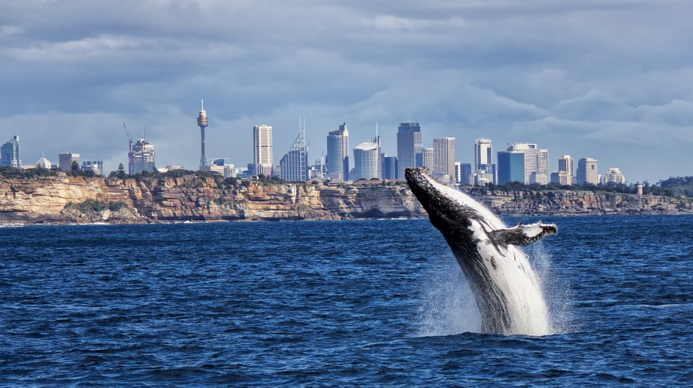 whale watching sydney tours